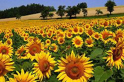 Goldene Sonnentage zum Sommerende