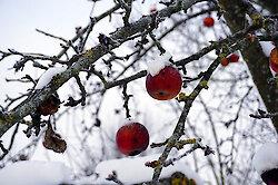 Erholsamer Winterurlaub im Bayerischen Wald
