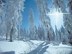 Weihnachten und Silvester im Bayerischen Wald