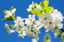 Frühlingsgefühle beim Osterurlaub im Bayerischen Wald